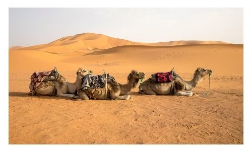 Holiday Deals Morocco