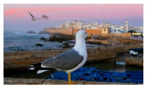 Morocco Tour Guides