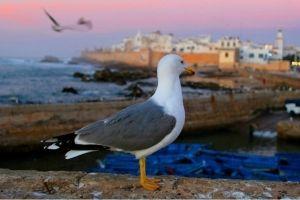 Essaouira Tourism